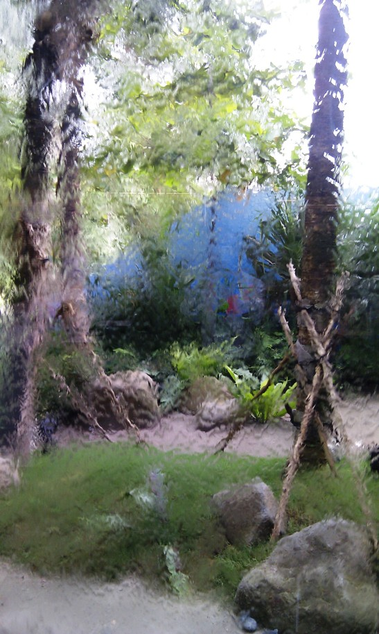 A water running down this glass wall blurring the view of the garden outside