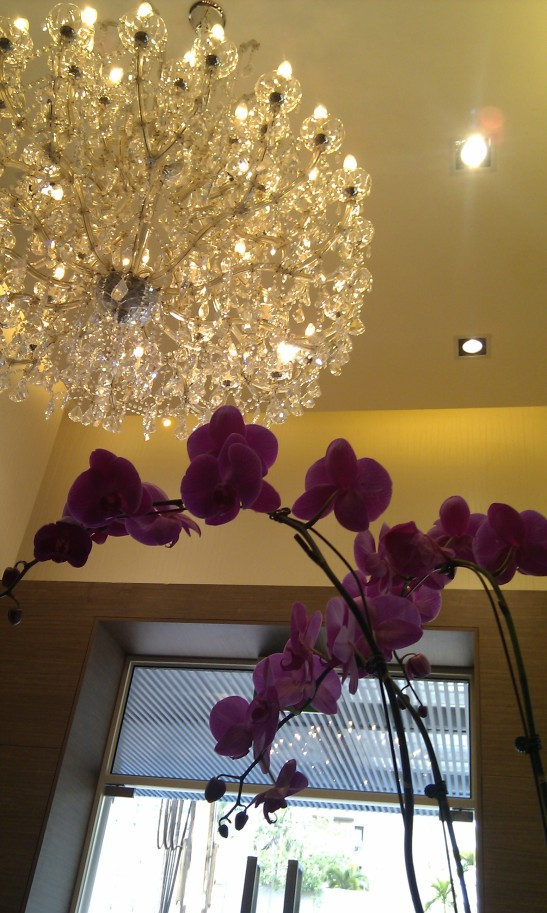 A chandelier and an orchid