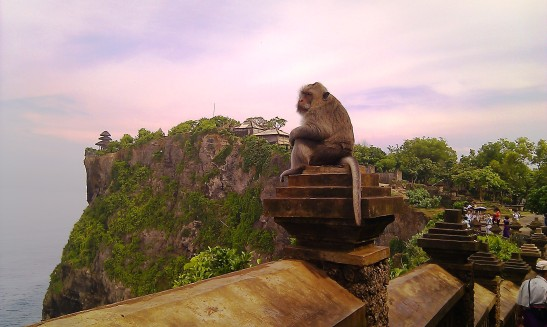 A mature monkey at Uluwatu Temple perched on the ledge looking over the Indian Ocean