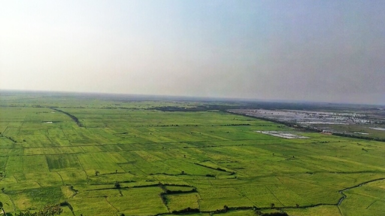 Green rice fields of Tonle Sap
