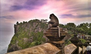 An old monkey in Uluwatu temple
